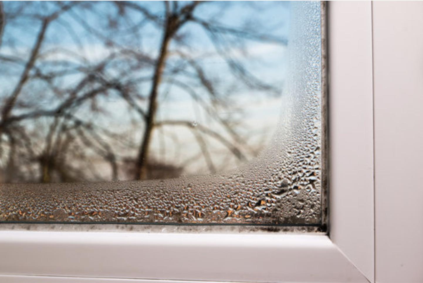 Condensation Between Windows